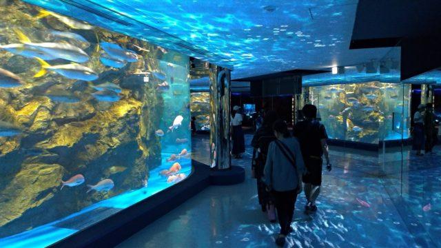 のとじま水族館を紹介!リニューアルした「のと海遊回廊」は必見!