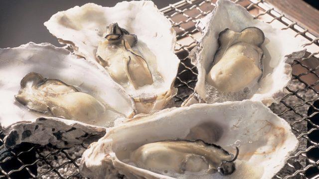 能登七尾湾の冬の味覚「養殖の牡蠣」を食べに来て!かき祭り始まるよ
