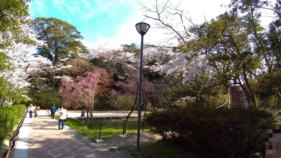 小丸山公園10