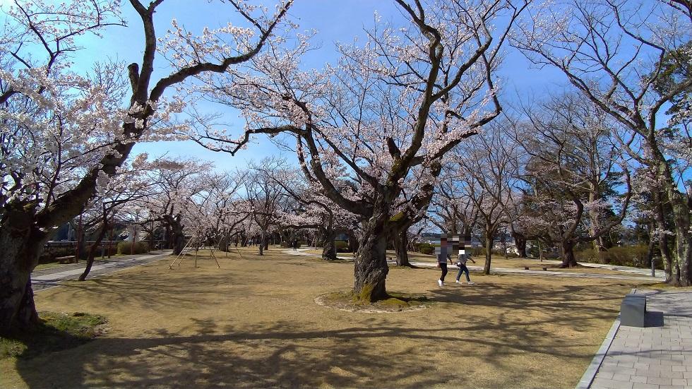 小丸山公園12