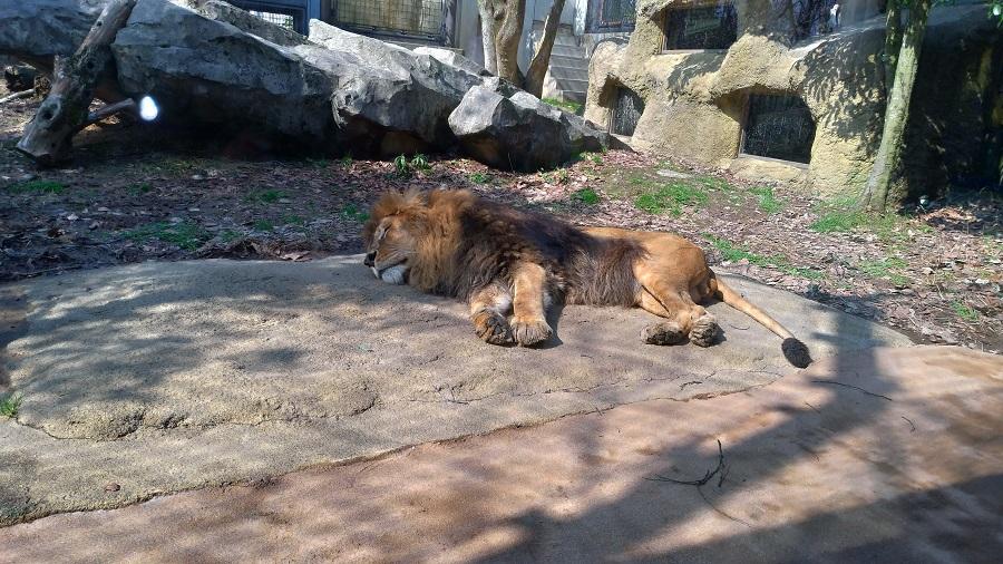 いしかわ動物園11