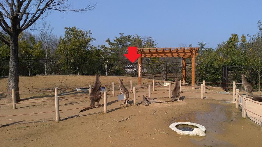 いしかわ動物園13