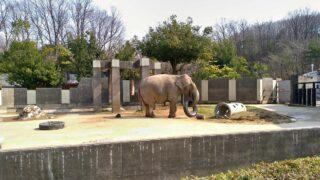2021年2月いしかわ動物園に行ってみた【コロナ禍の様子】