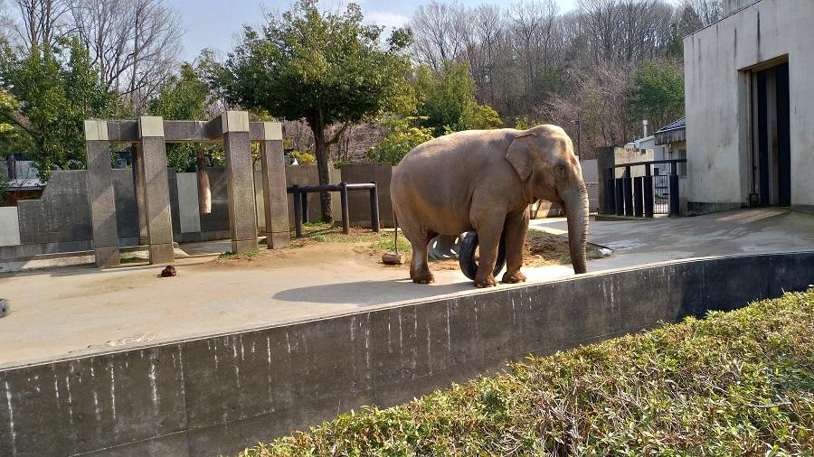 いしかわ動物園15
