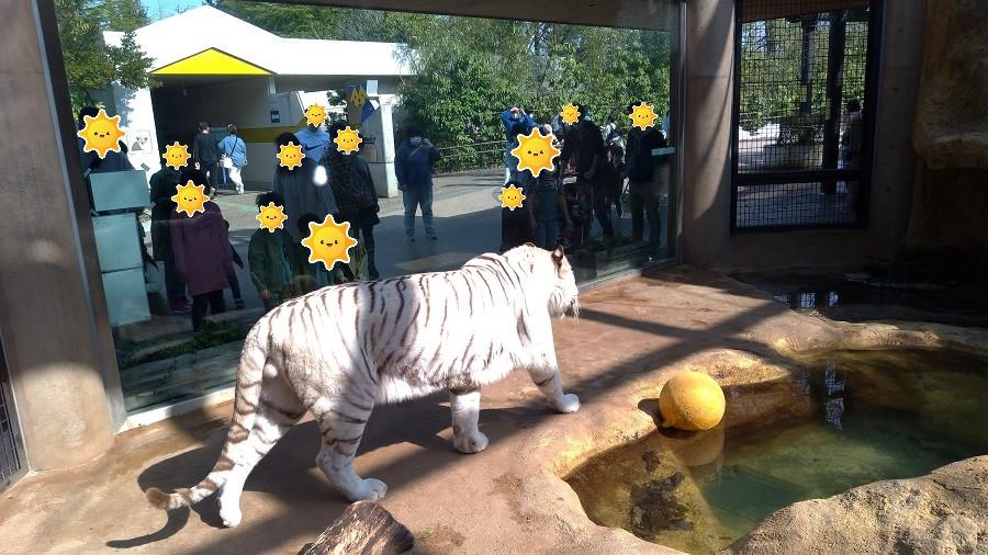いしかわ動物園9
